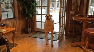 Max the Dane Complains About Wet Floor - Video