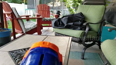 Dog snatches ball launched from Nerf gun out of the air