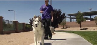 Local vet: Protect your pets from the heat