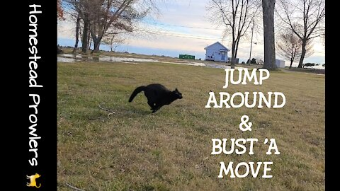 Homestead Cats Are Jumpin' For Joy and Runnin' Fur Their Lives