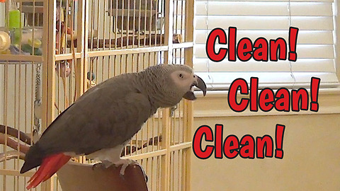 Parrot does double duty as both entertainer and supervisor