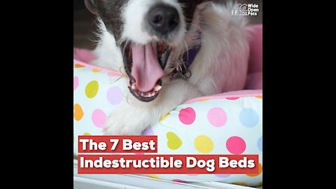 The 7 Best Indestructible Dog Beds