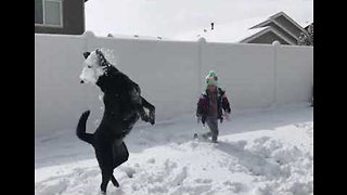 Snow Buddies - Dog Plays in the Snow With Little Girl