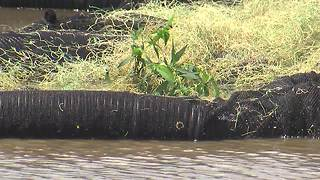 BAHS science students, city build floating wetland - Video