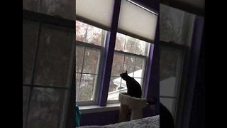 Adorable Kitten Sees Snow for the First Time