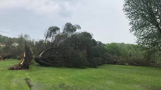 Strong Winds Uproot Trees In Clarksville - Video
