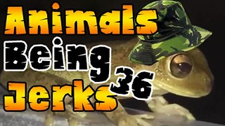 Animals Being Jerks #36 - Video