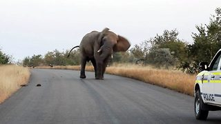 I'll show you who's boss! Huge elephant takes on pack of wild dogs before charging towards police car - Video