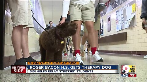 Roger Bacon High School gets therapy dog