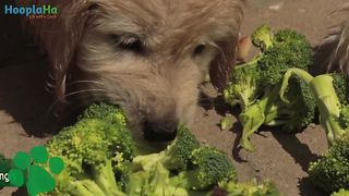 8 human foods dogs can eat - Video