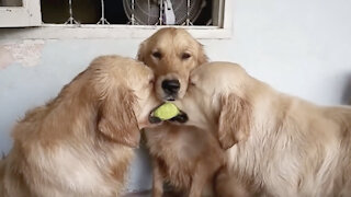 Dogs Fight For A Ball | Cute Playing Moment