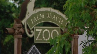 Palm Beach Zoo: Human error caused flooding in bush dog exhibit, animals presumed dead - Video