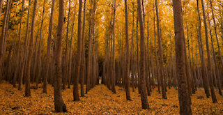 The Fall Of Bigfoot (Bigfoot Encounter In Washington State)