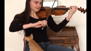Kitten fascinated by owner's music, gets closer look