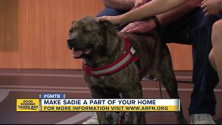 Dec. 23 Rescues in Action: Make Sadie a part of your family - Video