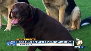 Missing dog found alive after violent accident - Video