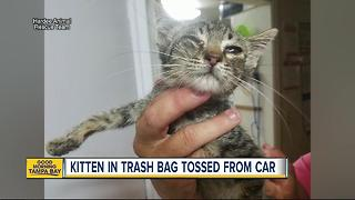 Kitten rescued from trash bag after tossed from car onto Wauchula road - Video