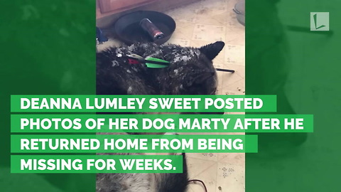 Dog Goes Missing, Returns Home Weeks Later Beaten with 2 Arrows Gouging Head