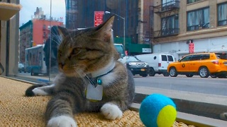Pop-Up Cat Cafe - Video