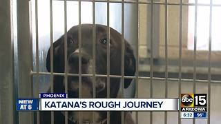 Dog at animal control linked back to Hurricane Harvey area - Video