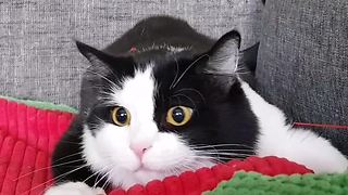 Feline shows what happens when catnip kicks in - Video
