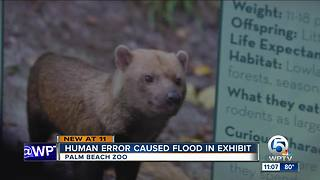 Human error caused flood in exhibit at Palm Beach Zoo - Video