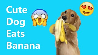 Cute Puppies Eat Banana - Video