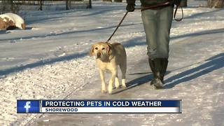 Vet offers tips to protect your pets in cold weather - Video