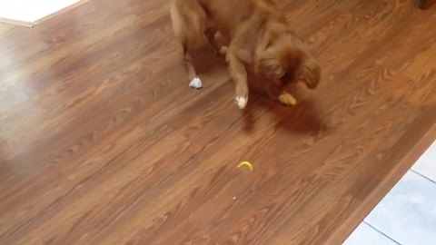 Curious Dog Is Completely Mind-Blown By A Lemon Slice