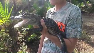Babcock Ranch swamp buggy eco-tours - Video
