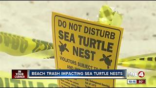 Sea turtle advocates plead for clean beaches - Video