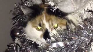 Cat hangs out in a Christmas tree