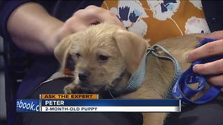 Ask the Expert: Using a harness to walk your dog - Video