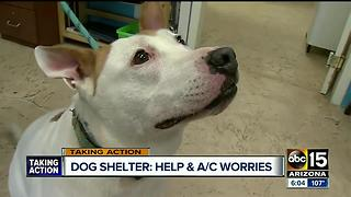 Dog shelter with A/C issues is permanently closing - Video