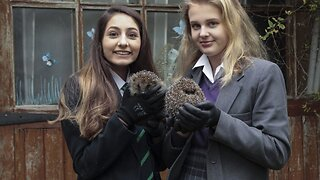 Doting Schoolgirl's Set Up Their Own 'hogspital' After Rescuing 400 Hedgehogs In Their Back Garden