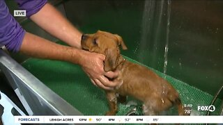 Pet of the Week: Bathing Mixy's 9 new puppies at GCHS