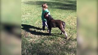 An Adorable Friendship Between A Toddler Boy And A Baby Donkey - Video