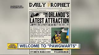 Pawgwarts: Florida pet shelter shorting animals by Harry Potter houses - Video