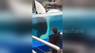 Killer Whale Spins Like Record Mimicking Boy's Movements - Video