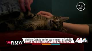 Whiskers Cat Café holding pop up event in Parkville - Video