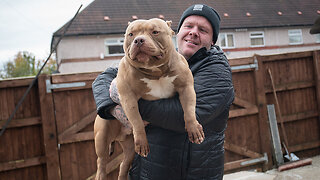 Meet Dios: The Bully Built Like A Bodybuilder | BIG DOGZ