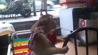 Impatient monkey really wants to eat