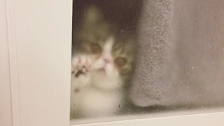 Sad cat wants to join owner in bathroom - Video