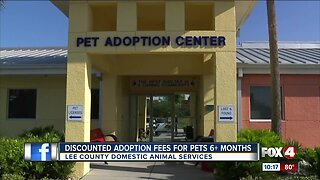 Discounted adoption fees