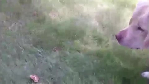 Dog FREAKS OUT Over Mushrooms