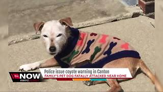 Police issue coyote warning in Canton - Video
