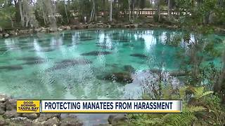 City of Crystal River floating around ideas to better protect manatees in Kings Bay