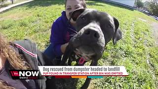 Dog found in dumpster on route to landfill - Video