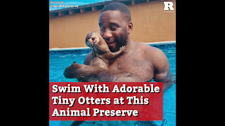 Swim With Adorable Tiny Otters at This Animal Preserve