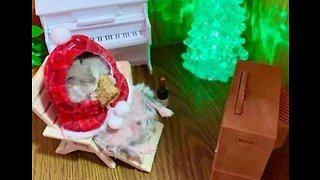 Pass the Ham: Happy Hamster Enjoys Festive Treat